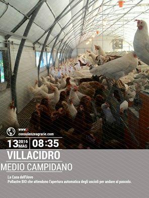 """Tecniche di gestione dell'allevamento avicolo Biologico - Progettazione dei nuovi impianti """"pollaio Zero energia"""" - info@consulenzeagrarie.com"""