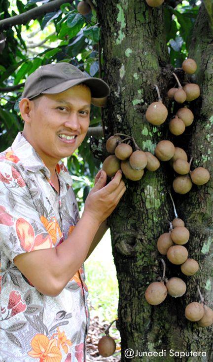 Kepel (Stelechoacarpus burahol) Tropical Fruits Collection in Taman Buah Mekarsari