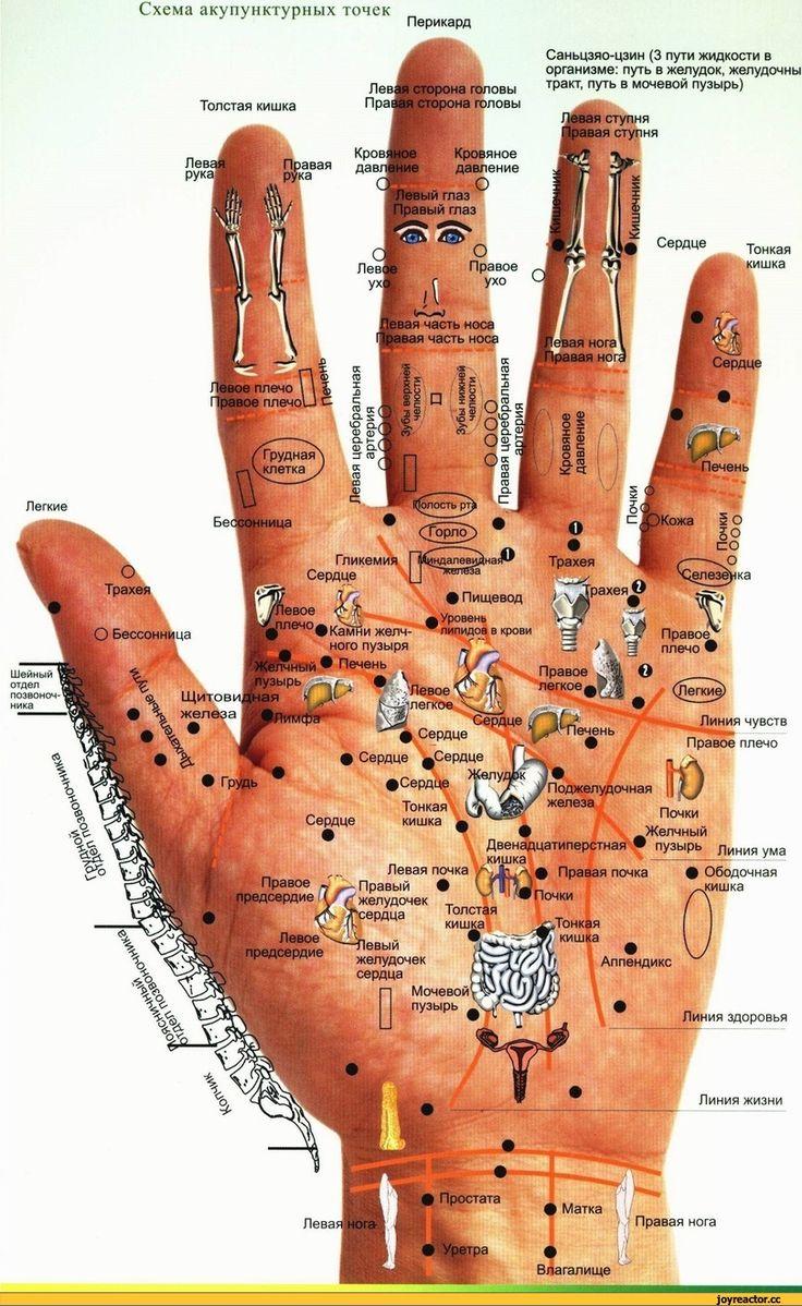#галилео-разное-рука-акупунктура-745195.jpeg (811×1321)