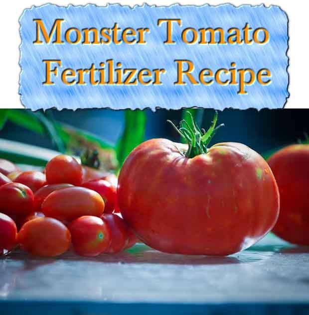 """Do you want to use natural fertilizer on your plants and vegetables? I know I do. I found a great article showing you the recipe for """"monster tomato fertil"""