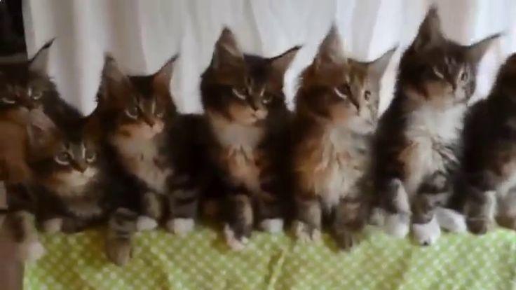 Приколы с котами. Лучшее / Funny Cats. The Best