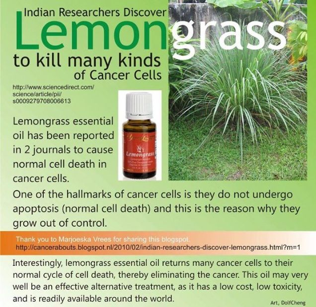 Young Living Lemongrass and Cancer Want to purchase oils or sign up for wholesale prices? http://www.us.ylscents.com/cindyland