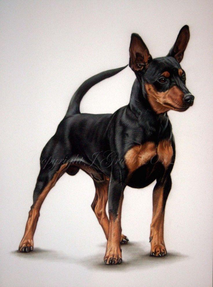 15 08 12 Miniature Pinscher Dog Pastel Portrait Jodie