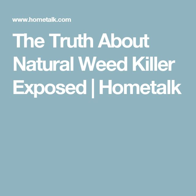 The Truth About Natural Weed Killer Exposed | Hometalk
