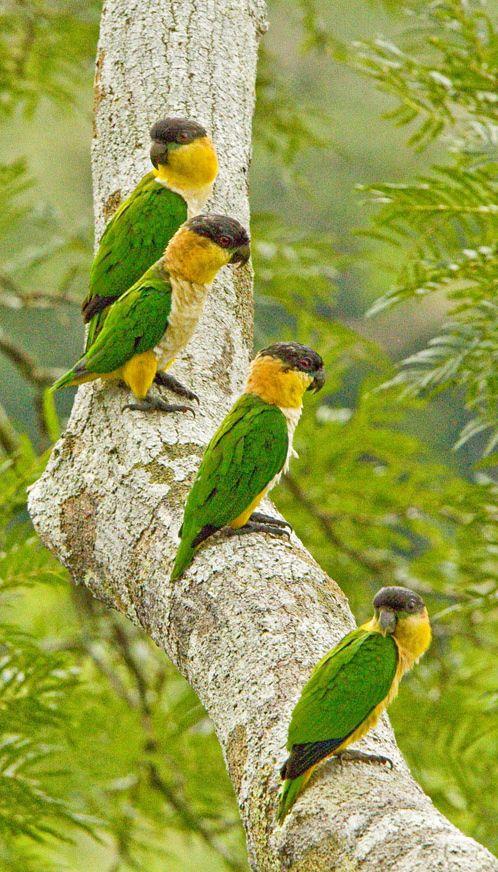 Colorful Quartet