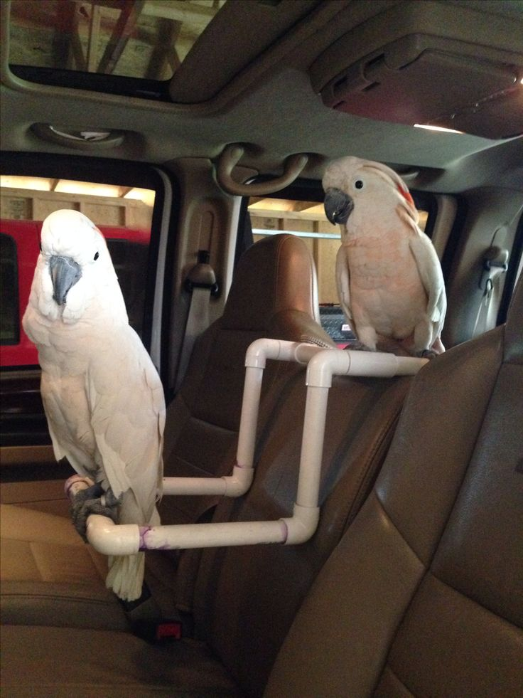Travel parrot perch made from PVC.