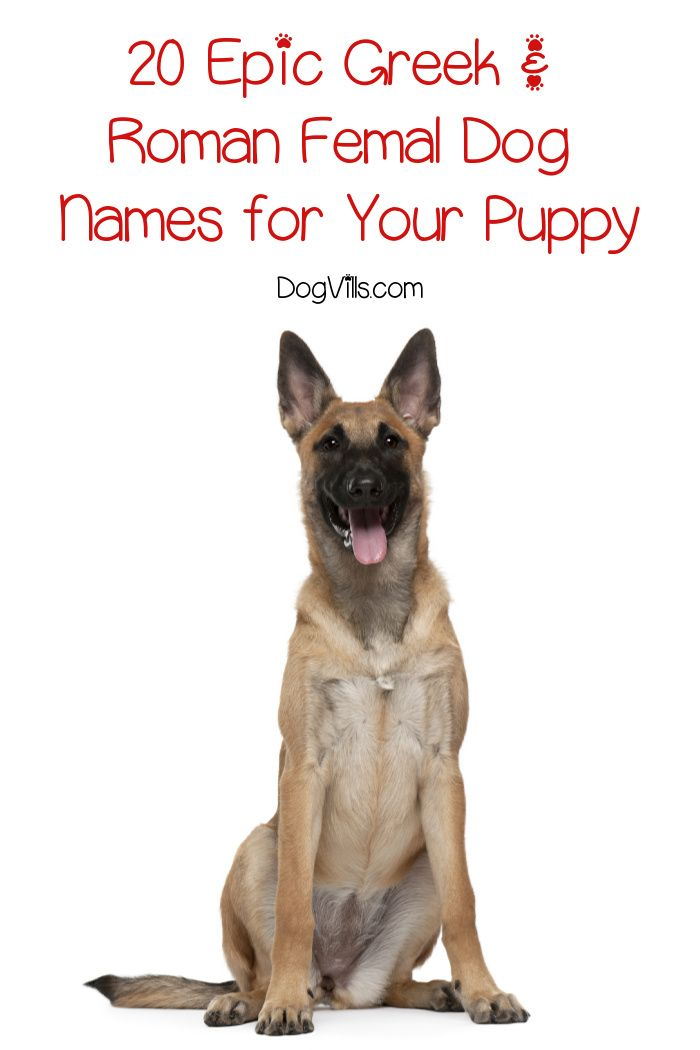 20 Epic Roman Greek Female Dog Names Dogvills Female Dog Names Dog Names Puppies Names Female