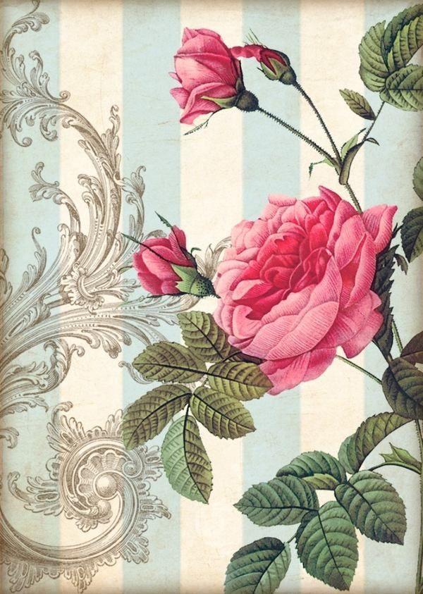Chic Cottage Mano/Etiqueta De Regalo álbum De Recortes Rosas imágenes (926-A) | Hogar y jardín, Tarjetas y suministros para fiestas, Más suministros para regalos y fiestas | eBay!