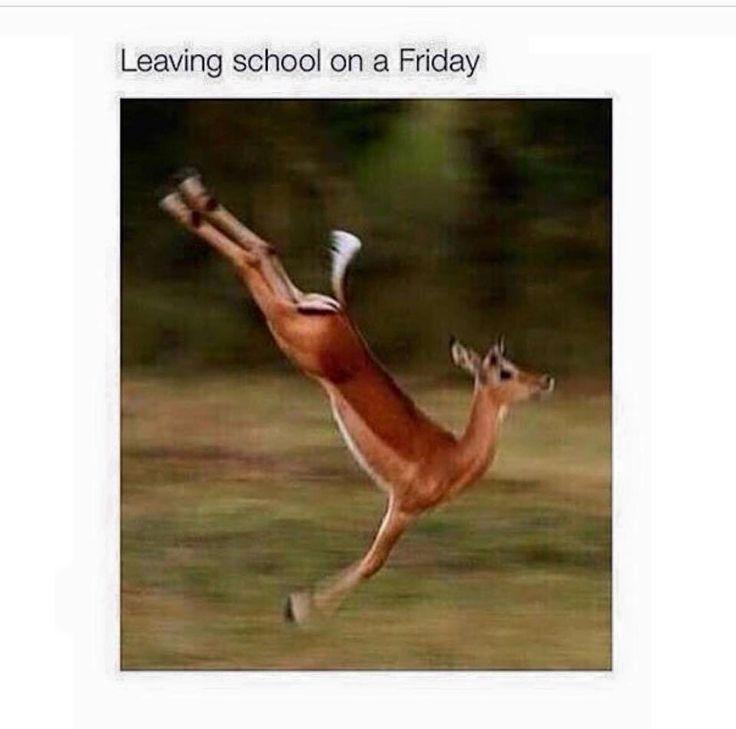 Funny Friday Meme Tumblr : Best it s friday images on pinterest funny stuff