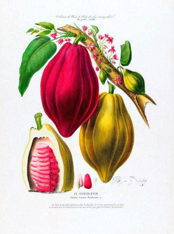 antiguo francés descarga digital de ilustración de chocolate