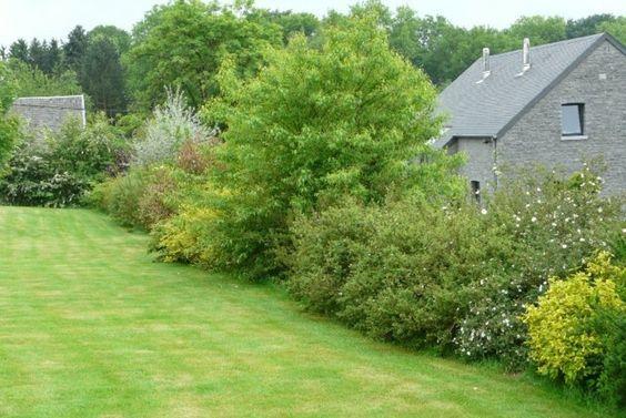 171 best jardin plantes images on pinterest balconies - Haie sans entretien ...