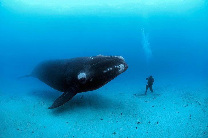 предназначено кит фото с людьми культурист, успешный тренер
