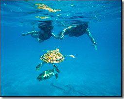 Swim with Turtles in Barbados #honeymoon #destinationwedding Destination-Wedding-Experts.com