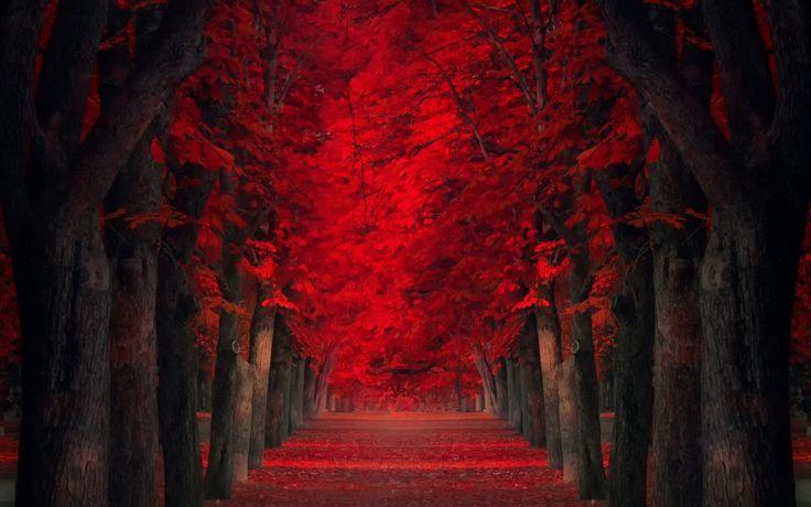 autunno-tunnel-rosso.jpg (JPEG obrázek, 1920×1200 bodů)