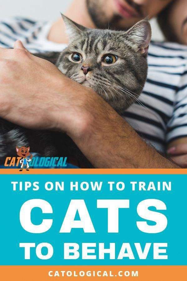 Best Practices For Training Your Cat How To Train Your Cat To Actually Listen To You And Behave Learn More Info Abou Cat Training Cat Allergies Cat Behavior