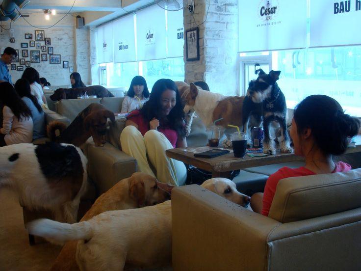 House of Hounds dog cafe- Shoreditch