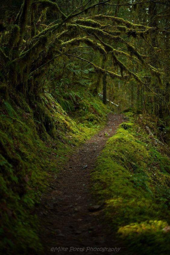 Bosque oscuro y misterioso!!