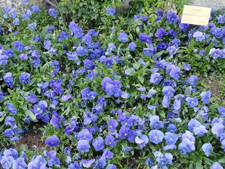 Mejores 36 im genes de gu a de plantas ornamentales en for Tres plantas ornamentales