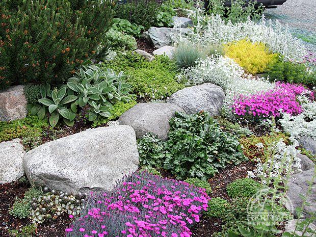 gorgeous rock garden with sedum & pink phloxGardens Ideas, Perennials, Large Rocks, Gardens Great Info, Rocks Beds, Rocks Gardens Great, Landscapes, Gardens Pl, Backyards Gardens