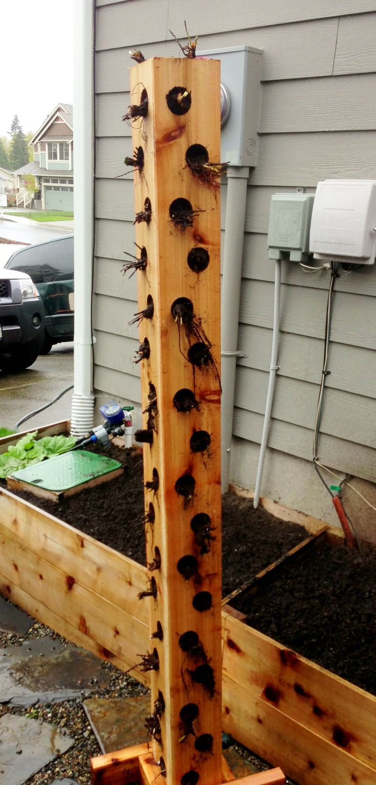 Vertical planter just planted with strawberry plants. Made with fence boards.