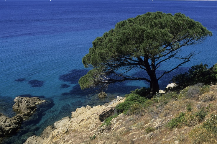 Vacation in Provence, by the Mediterranean sea... at the hotel Dolce Frégate Provence, in Bandol
