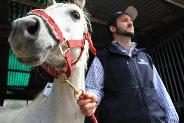 Our researchers have customised and 3D printed a unique 'horse-thotic' to help Holly the pony recover from chronic laminitis.