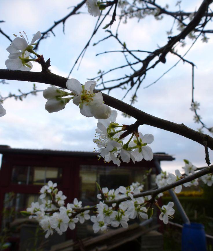 Foto Kirsten Kramer Flowers Photo Kramer