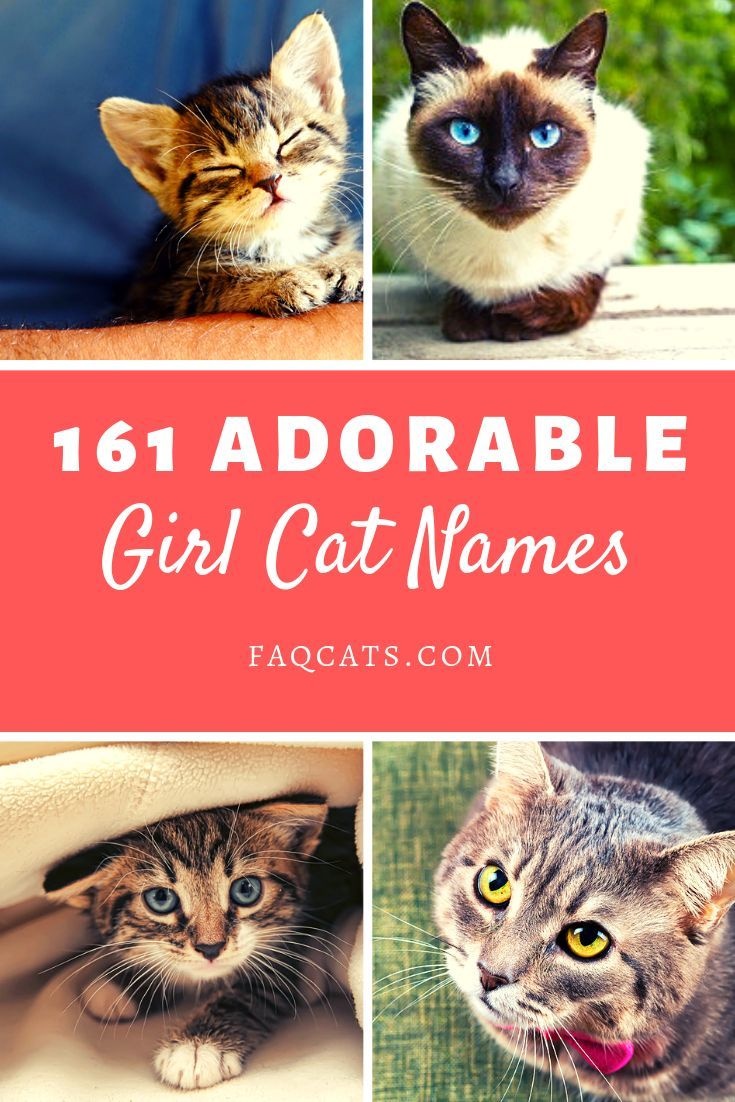 Looking Unique Girl Names For Your Cat Breed Click Over To Read Our Huge List Of 161 Cat Names Whether Your Cat Is Gr Cute Cat Names Girl Cat Names Cat Names