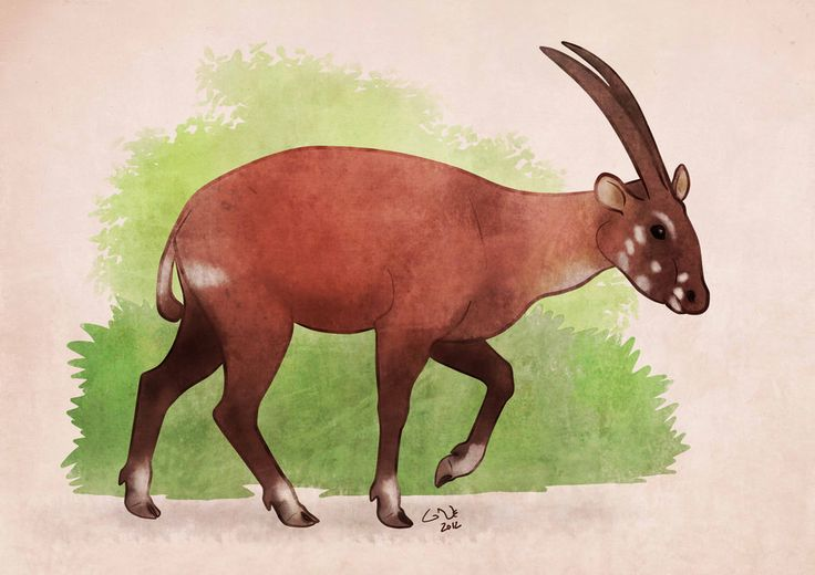 how to save the saola To save saola in the wild, it is imperative to reduce snaring in areas where animals still survive.