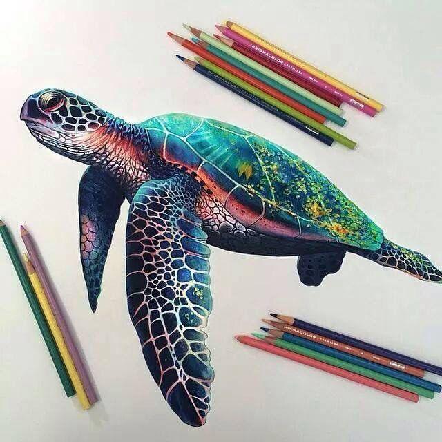 Tartaruga cascuda feita por Gil