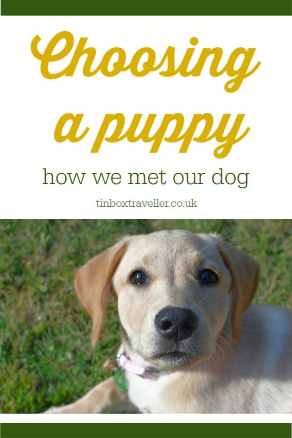 What Does A Dog's Tail Wagging Mean?