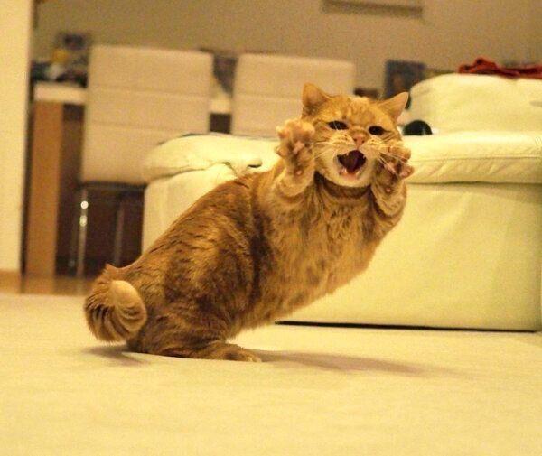 演技派 短足猫兄妹 が繰り出すポーズがすごい 飼い主さんが選ぶ 4つのベストショット とは ねこのきもちweb Magazine 子猫 キュートな猫 猫