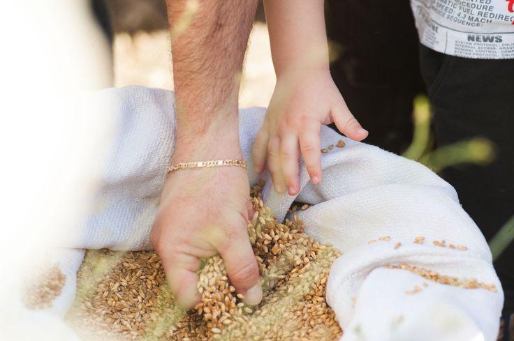 Masseria La Calcara, Agro di Altamura (BA)