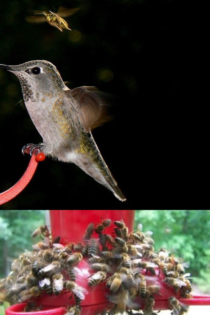How To Keep Bees Off Hummingbird Feeders in 2020 Humming