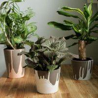 Oltre 25 fantastiche idee su decorare vasi su pinterest - Decorare vasi terracotta ...
