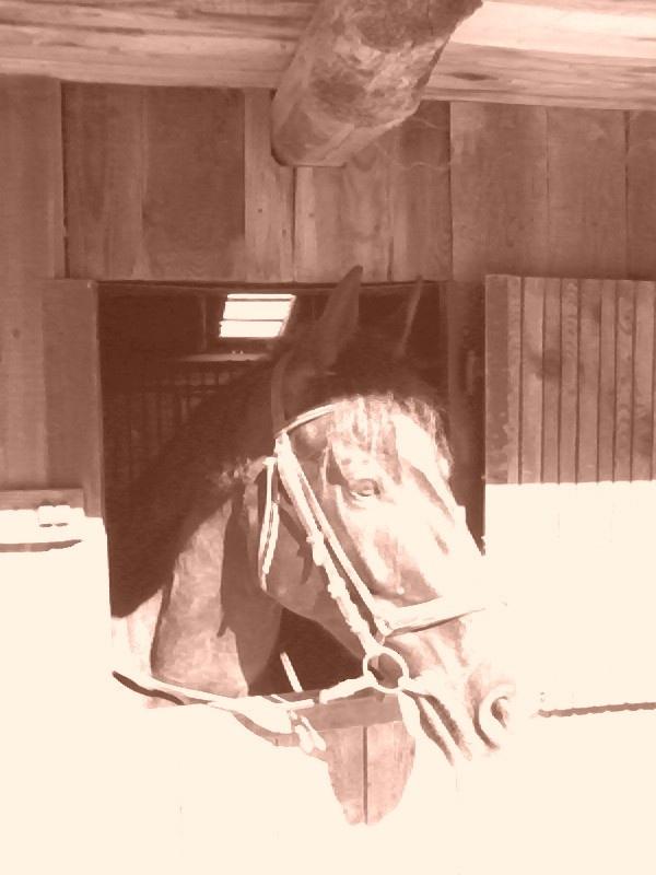 Val Brembana - Horsehead -- Val Brembana - Testa di Cavallo