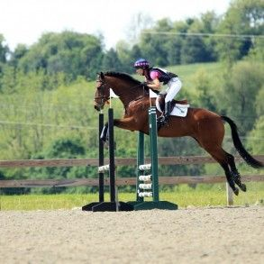 Grubby: Novice Level Eventer. Eventing Horse for Sale in VA. | Tebogo Sport Horses