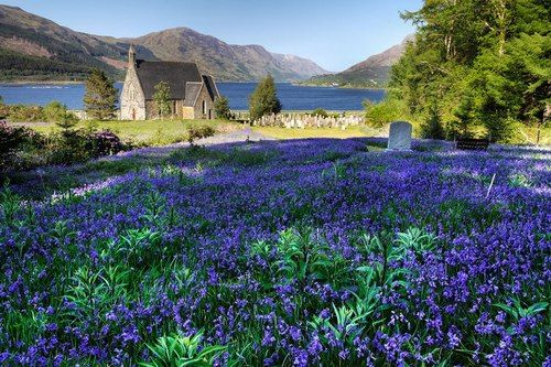 Bluebells in the highlands of Ballachulish, Scotland, so beautiful