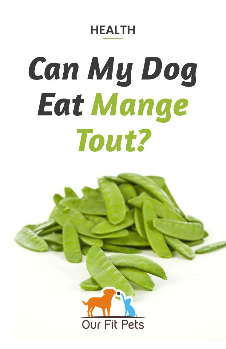 Can My Dog Eat Mange Tout With Images Dog Eating Eat Mang