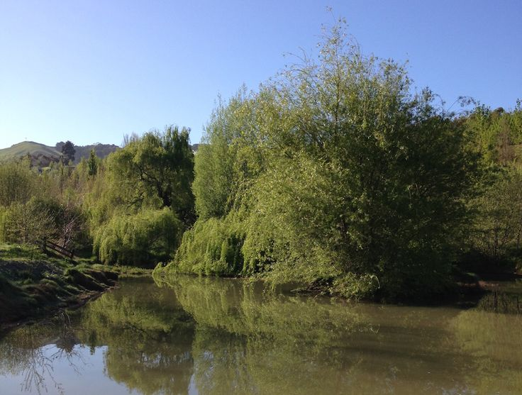 Duck pond in Tauroa Valley