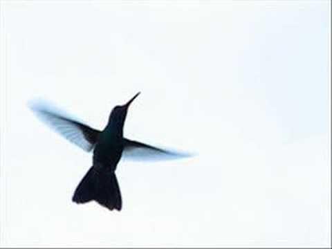 Silvio Rodriguez Ala de colibrí
