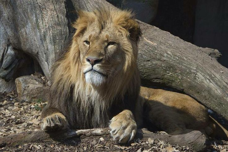 Chief, Zoo Vienna