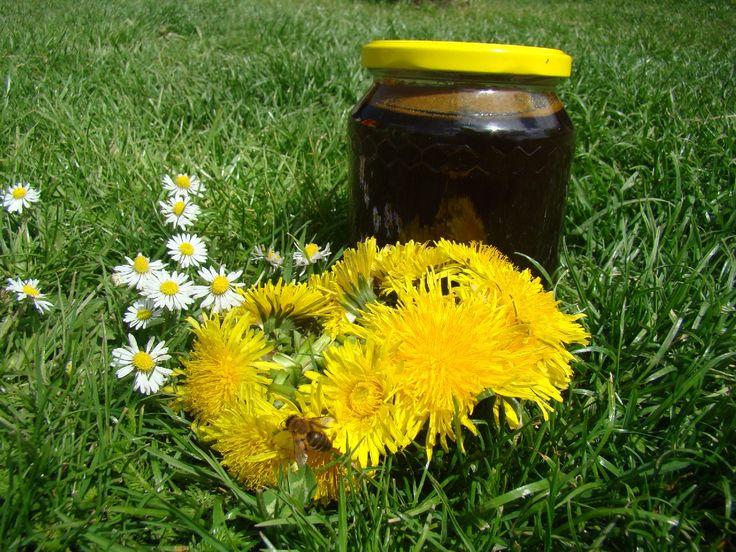 Pampeliškový med podle Marie Treben