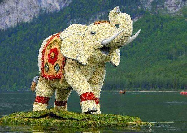 Скульптура из цветов слона, красивые фотографии