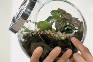 Giardino in bottiglia fai da te, come creare un giardino piccolissimo!   I sempreverdi