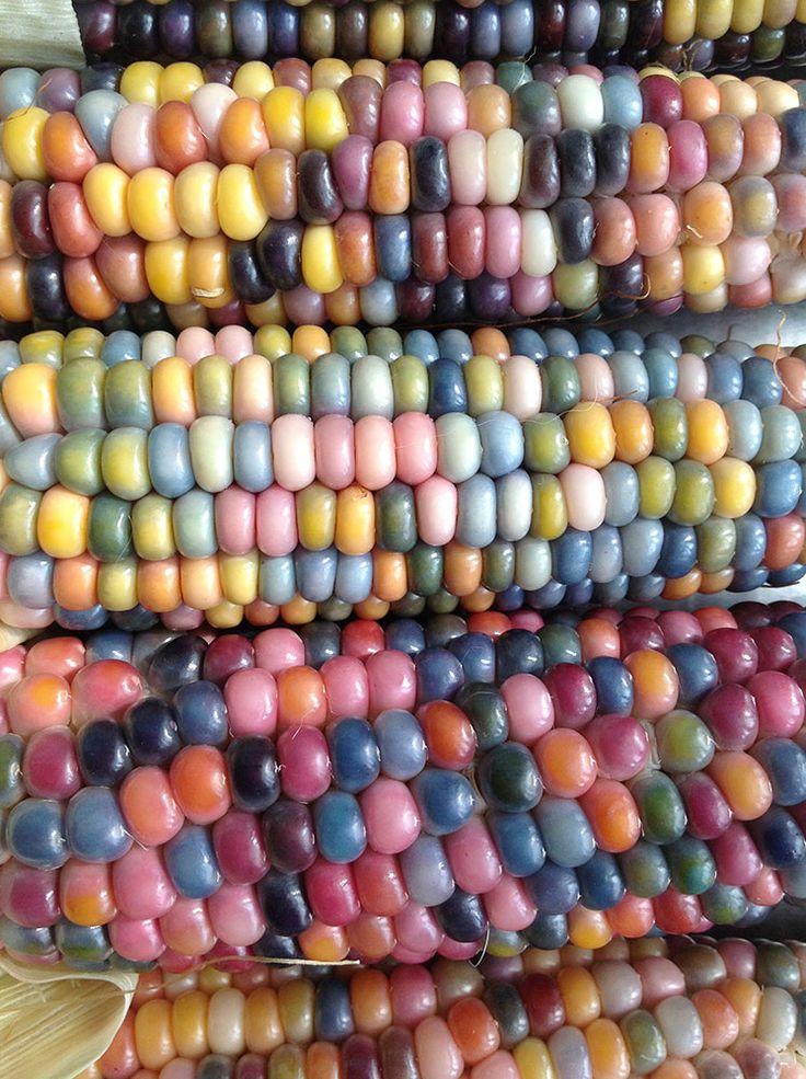 Не спешите пройти мимо, если увидите на прилавке кукурузу всех цетов радуги. Она не токсична и абсолютно безопасна для нашего здоровья.