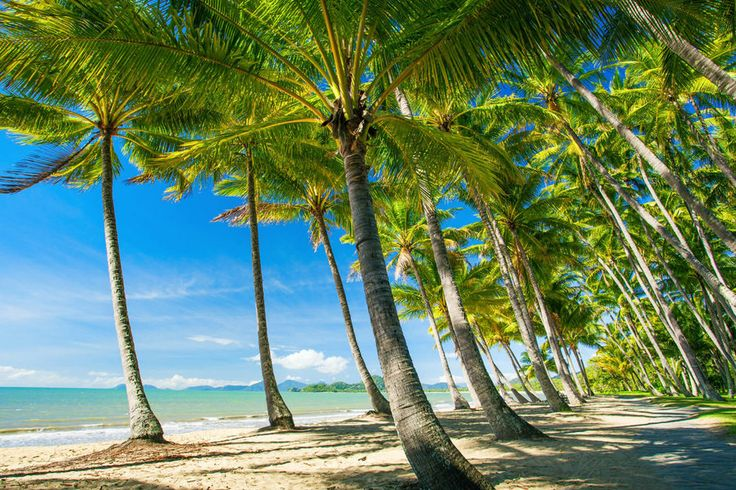 Five Things To Do In Palm Cove