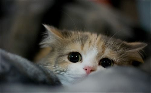 Hunting cat eyes!