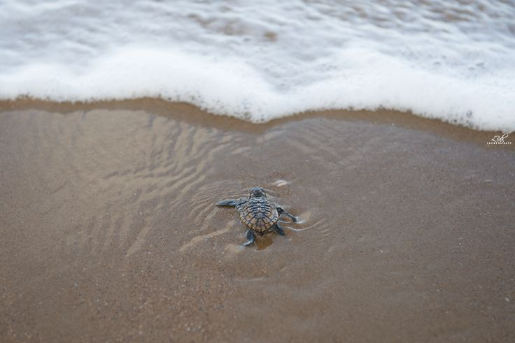 BUCKET LIST: See the bubba turtles hatch at Mon Repos. November - January.