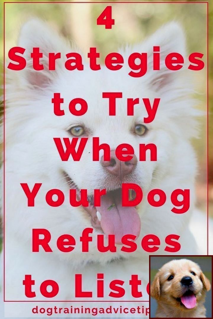 House Training A Puppy For Dummies And Dog Behavior Hiding Dog